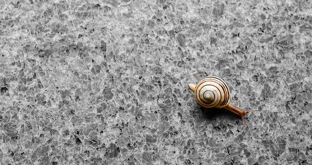 Background, Snail, Shell, Granite, Crawl
