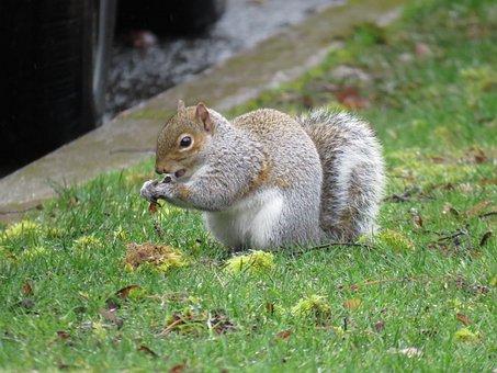 Squirrel, Sciuridae, Rodent, Animal, Furry, Eating