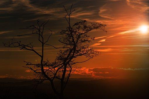 Sun, Tree, Sky, Sunset, Abendstimmung, Back Light