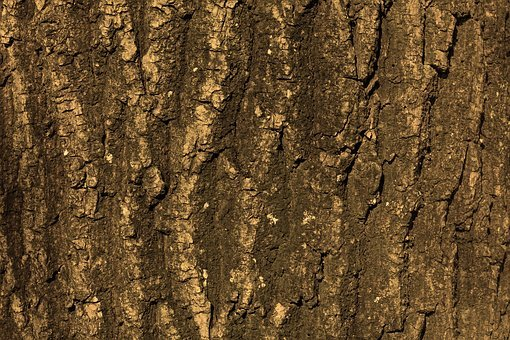 Texture, Tree, Bark, Background, Structure, Nature