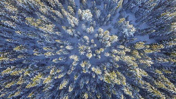 Forest, Abstract, Frozen, Sunny, Nature, Cold, Color