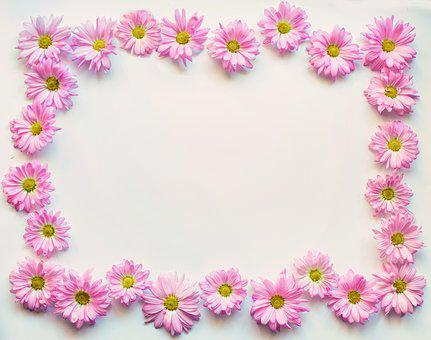 Pink Daisies, Border, Frame, Copy-space, Copy Space