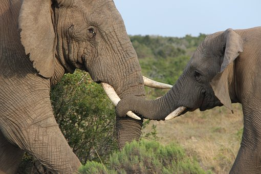 Elephant, Cub Elephant, Mother Love, Wildlife, Nature