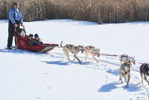 Ecotourism, Dogsled, Dog, Sled, Snow, Husky, Winter