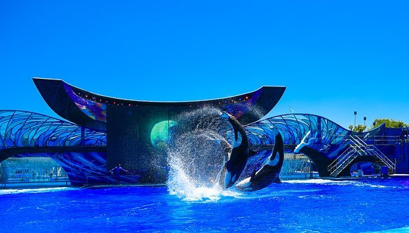 Orlando, Florida, Whale, Killer Whale, Traveling, Fun