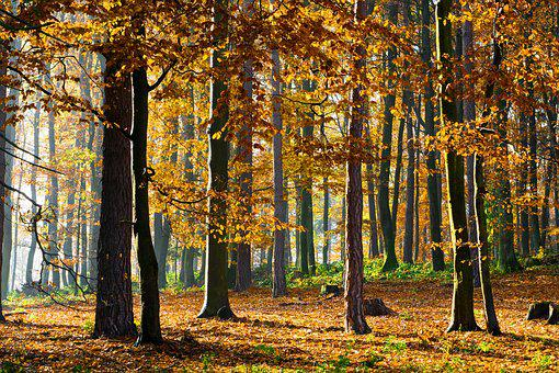 Forest, Jesen, Green, Nature, Trees, Country, Foliage