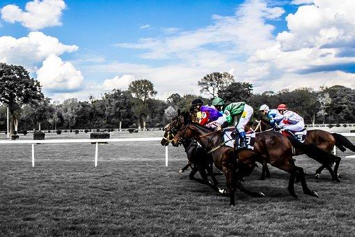 Horses, Race, Jockey, Gallop, Hippodrome, Competition