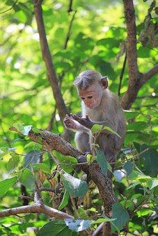 Monkey Look On The Hand, Monkey, Makake, Cute, Animal