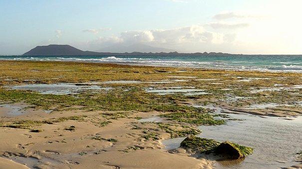 Beach, Sand, Green, Fuerteventura, Lanzarote, Horizon