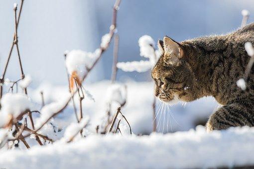 Cat, Winter, Snow, Domestic Cat, Pet, Sneak Up On