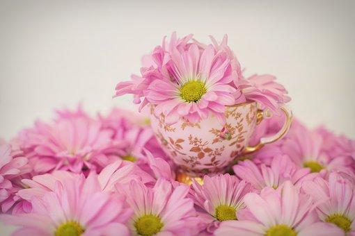 Pink Daisies, Flowers, Spring, Summer, Tea Cup