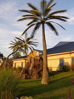 Palm Trees, Wildwood Inn, Kentucky, Trees, Palm Tree