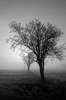 Fog, Trees, Field, Early In The Morning, Silhouette