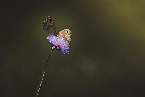 Flower, Blossom, Bloom, Purple Flower, Summer