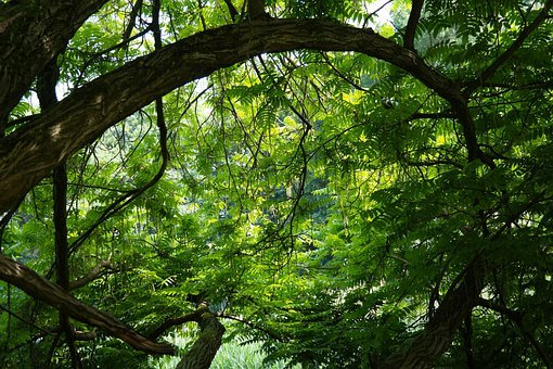 Tree, Jungle, Green, Branches, Branch, Leaf, Back Light