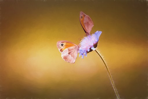 Image, Painting, Paint, Painted, Butterflies, Two