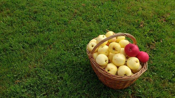 Relva, Cesto, Maçãs, Frutas, Fruta, Natureza, Alimentos