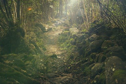 Forest, Path, Mystical, Rocks, Fairytale, Sunlight
