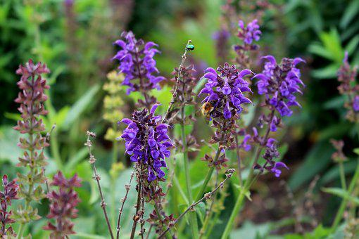 Purple, Violet, Flower, Blossom, Bloom, Close, Plant