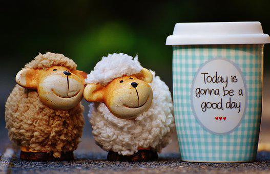 Sheep, Beautiful Day, To Go, Joy, Coffee, Cup, Happy