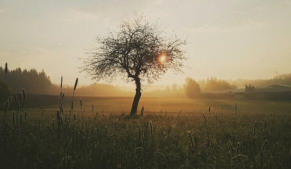 Tree, Morning, Nature, Sunrise, Mood, Sun