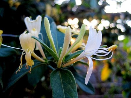 Flowers, Tubes, Trumpet Shaped, Yellow, White, Petals