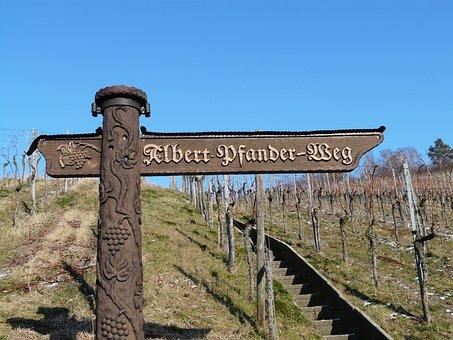 Vineyard, Wine, Winegrowing, Vine, Plantation, Autumn