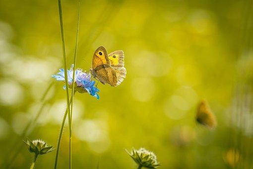 Meadow, Summer Meadow, Summer, Wild Flowers