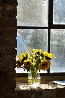 Back Light, Bright, Yellow, Flower, Old Brickyard