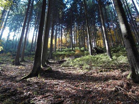 Forest, Mood, Autumn, Nature, Light Beam, Light
