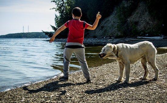 Kids, River, Dogs, Summer, Game, Beach, Sun, Vacation