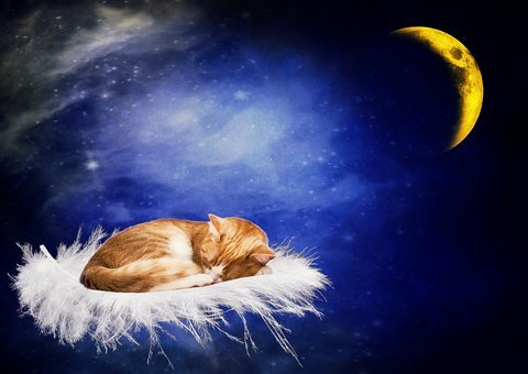 Cat, Good Night, Sleep, Tired, Moon, Feather, Float