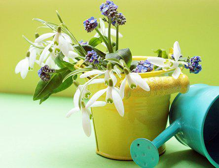 Snowdrop, Forget Me Not, Flowers, Watering Can, Bucket