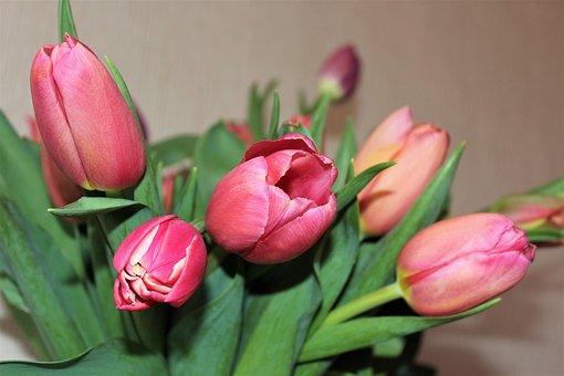 Tulips, Flowers, Spring Flowers, March 8, Krupnyj Plan