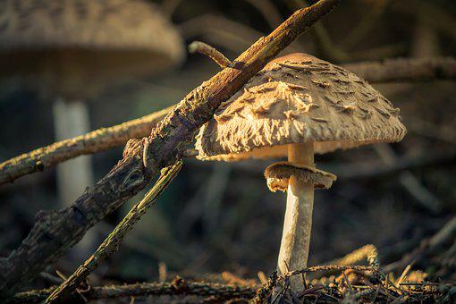 Nature, Mushroom, Forest, Forest Mushroom, Close