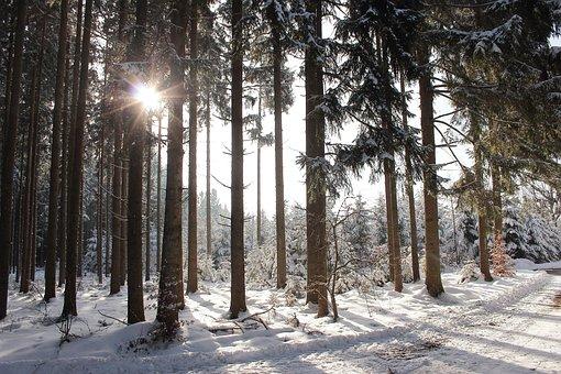 Winter Sun, Forest, Snow, Back Light, Winter, Nature