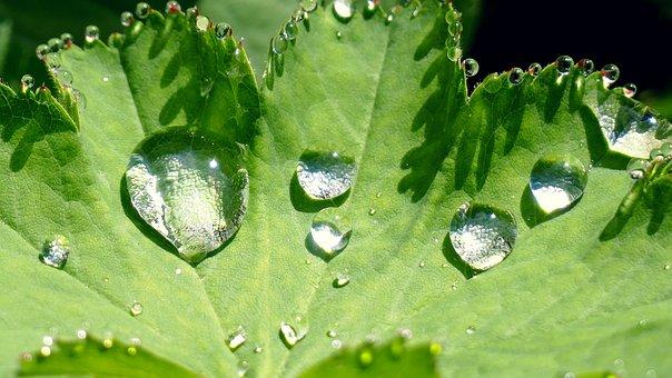 Nature, Leaf, Raindrop, Green, Plant, Rain, Close Up