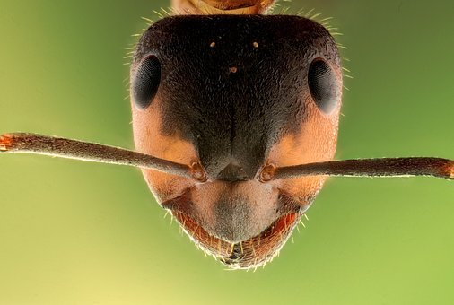 Stack, Insect, Ant, Macro, Animal, Head, Sharp, Micro