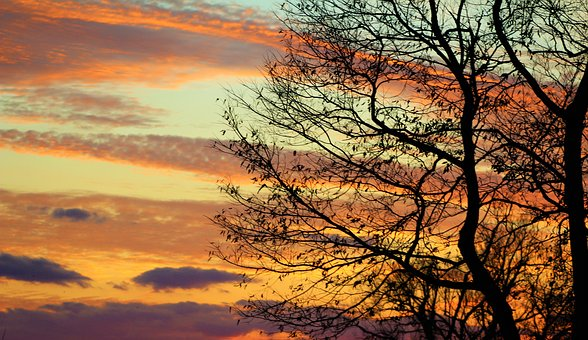 Evening, Sky, Fall, Tree Branches Silhouette