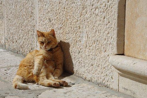 Cat, The Cat Lying Down, Cat In The Sun