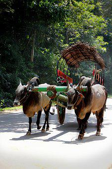 Cart, Oxcart, Ox, Bauer, Sri Lanka, Road, Rural