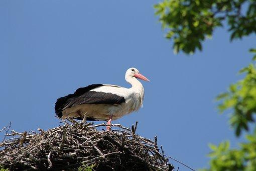 Stork City, Marchegg, Castle, Park, Garden, Stork