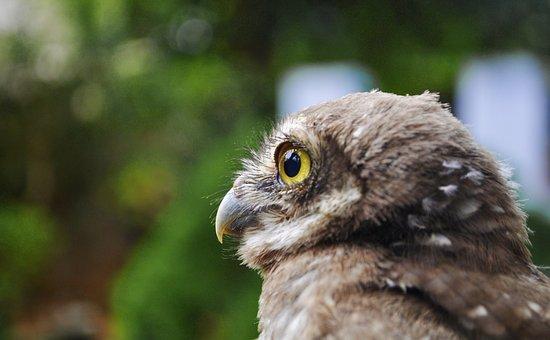 Owl, Bird, Nature, Wild, Character, Wildlife, Color