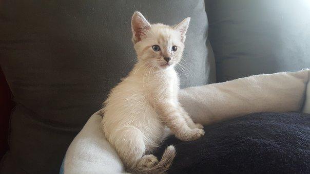 Kitten, Fluffy, Cute, Adorable, Cat, Animal, Pet