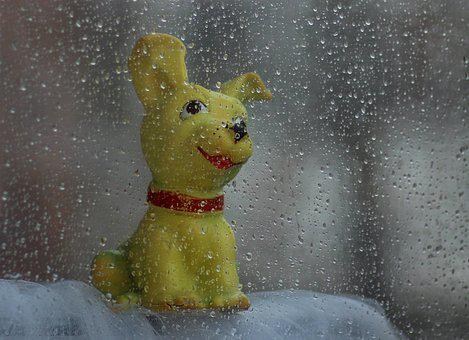 Dog, Toy, Rain, Window, About, Calling, Drops