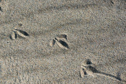 Bird, Tracks In The Sand, Beach, Sand, Footprints