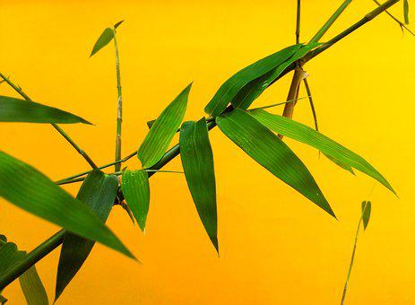 Leaf, Bamboo, Nature, Plant, Green, Japanese, Branch