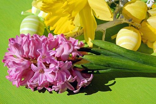 Easter Theme, Hyacinth, Flower, Flowers, Pink