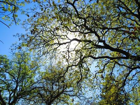 Tree, Plant, Green, Nature, Garden, Leaf, Environment