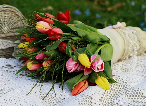 Bluemme, Spring, Green, Plant, Nature, Blossom, Bloom